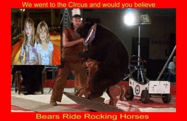 circus bear riding a rocking horse