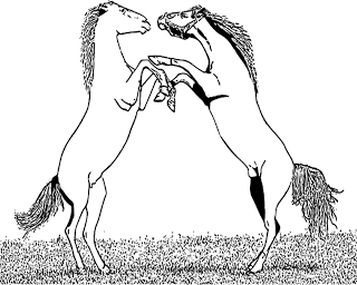 Horse Coloring Page Pony Coloring Pages Horse Pictures